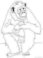 Monkey coloring pages. Download and print Monkey coloring ...