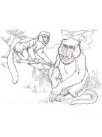 Monkey-animal-coloring-pages-340