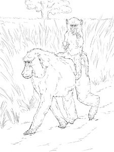 Monkey-animal-coloring-pages-347