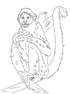 Monkey-animal-coloring-pages-350