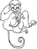 Monkey-animal-coloring-pages-352
