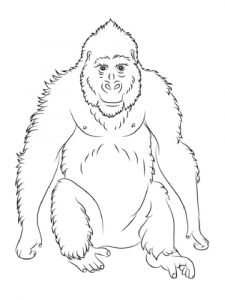 Monkey-animal-coloring-pages-353