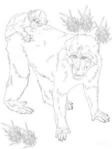 Monkey-animal-coloring-pages-354