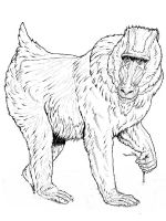 Monkey-animal-coloring-pages-359