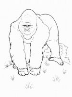 Monkey-animal-coloring-pages-363