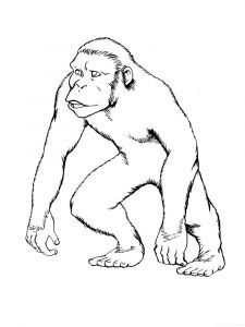 Monkey-animal-coloring-pages-368