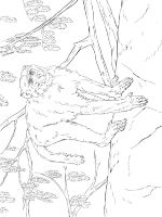 Monkey-animal-coloring-pages-369
