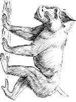 Monkey-animal-coloring-pages-371