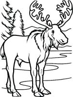 Moose-coloring-pages-13