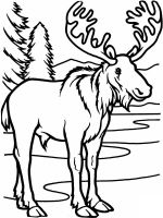 Moose-coloring-pages-2