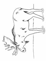 Moose-coloring-pages-3