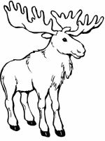 Moose-coloring-pages-4