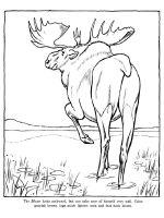Moose-coloring-pages-5