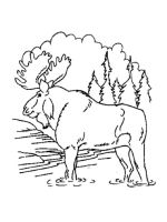Moose-coloring-pages-6