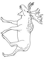 Moose-coloring-pages-7