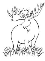 Moose-coloring-pages-8
