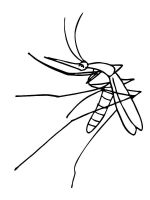 Mosquito-coloring-pages-1