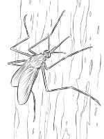 Mosquito-coloring-pages-10
