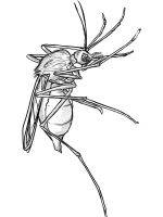 Mosquito-coloring-pages-11