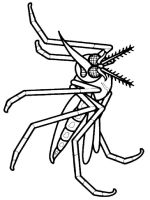 Mosquito-coloring-pages-8