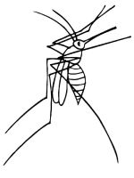 Mosquito-coloring-pages-9