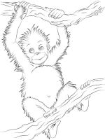 Orangutan-coloring-pages-1