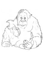 Orangutan-coloring-pages-10