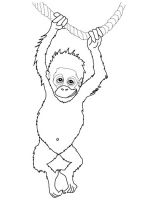 Orangutan-coloring-pages-2