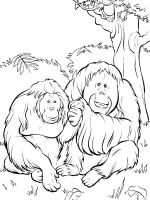 Orangutan-coloring-pages-4