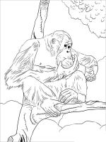 Orangutan-coloring-pages-6