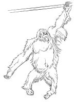 Orangutan-coloring-pages-7