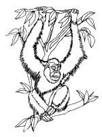 Orangutan-coloring-pages-9