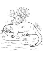 Otter-coloring-pages-10