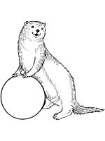 Otter-coloring-pages-13
