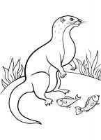 Otter-coloring-pages-16