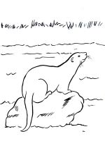 Otter-coloring-pages-24