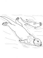 Otter-coloring-pages-4