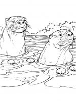 Otter-coloring-pages-5