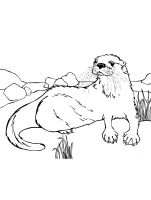 Otter-coloring-pages-6