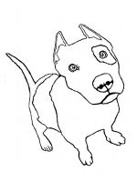 Pitbull-coloring-pages-1