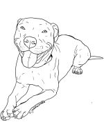 Pitbull-coloring-pages-4
