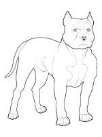 Pitbull-coloring-pages-7