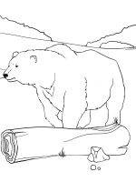Polar-Bear-coloring-pages-1