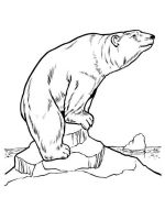 Polar-Bear-coloring-pages-16