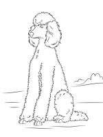 Poodle-coloring-pages-1