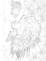 Porcupine-coloring-pages-1