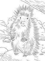 Porcupine-coloring-pages-10