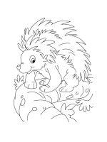 Porcupine-coloring-pages-11