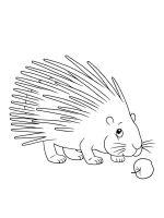 Porcupine-coloring-pages-2