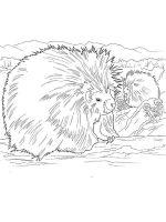 Porcupine-coloring-pages-3